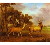 Red Deer Stag and Hind 1792
