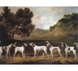 Foxhounds In Landscape