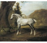 Dapple Grey Stallion