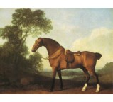 Saddled Bay Hunter 1786