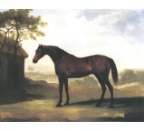 Squirrel A Bay Horse